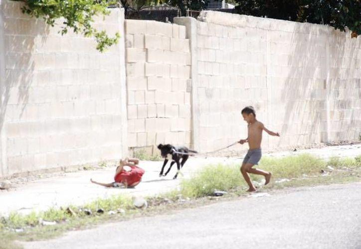 En muchas familias yucatecas sobran las mascotas, pero falta mucha educación y cultura del cuidado animal. (SIPSE/Archivo)