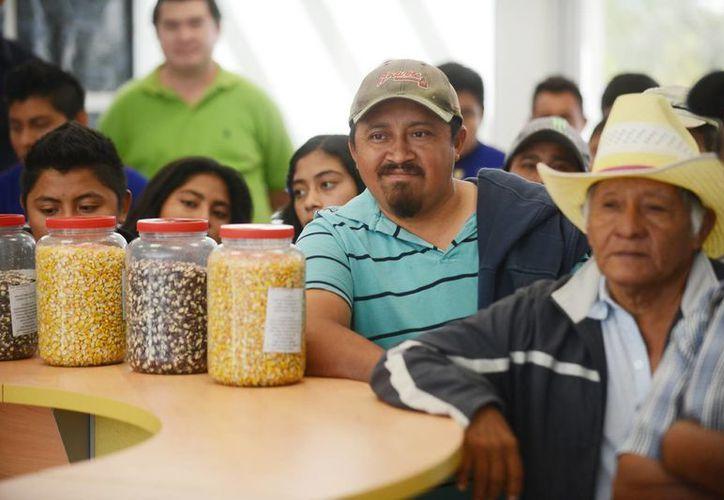 Campesinos aportan sus semillas Banco de germoplasma del Cicy. (Milenio Novedades)