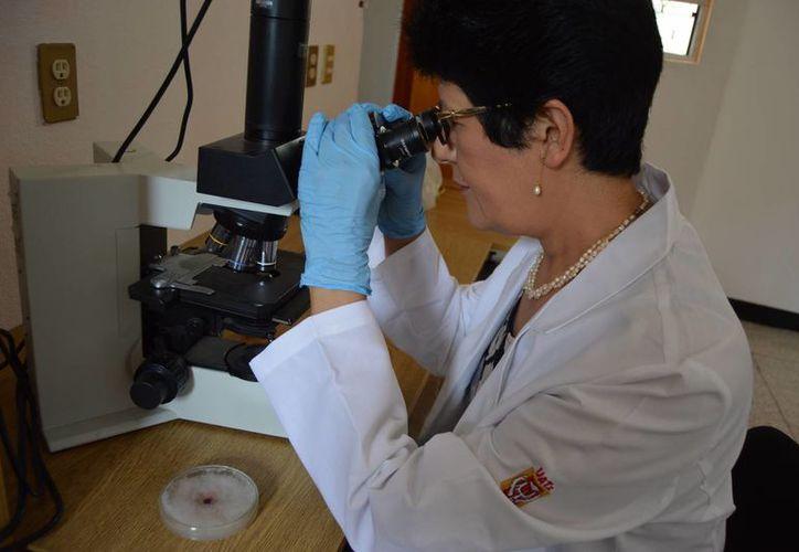 El hongo Fusarium culmorum descompone de manera completa el plástico. (Agencia Informativa Conacyt)