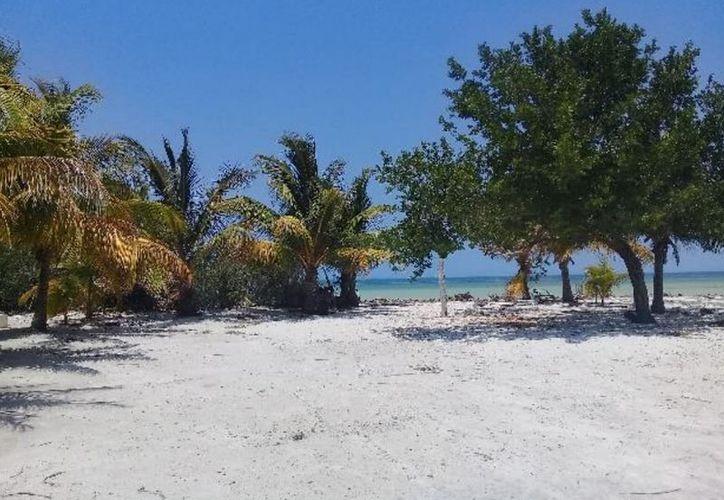 Planeaban ocupar un predio de 98.5 metros cuadrados en la zona costera. (Daniel Tejada/SIPSE)