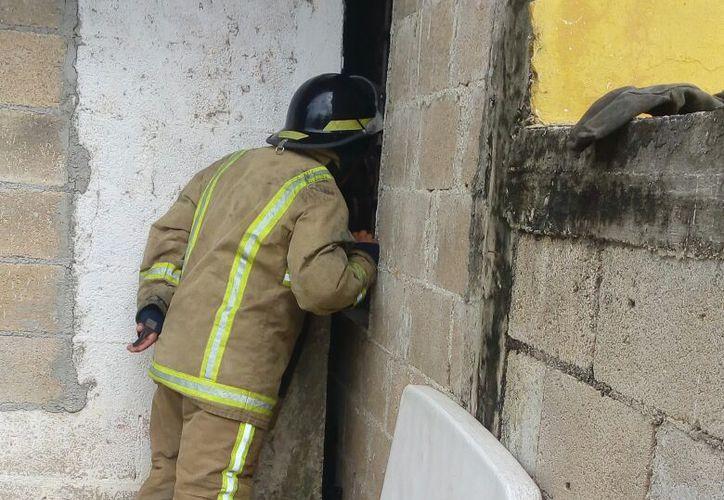 Bomberos tuvieron que romper la pared para poder rescatar al gato atorado entre los muros. (Foto: Redacción/SIPSE)