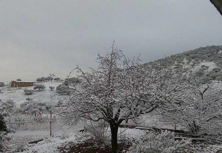 Una tormenta invernal en Sonora obligó al cierre temporal del tramo Santa Cruz-Cananea. (Notimex)