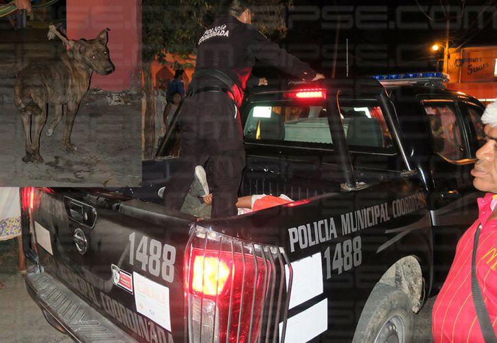 La policía llegó para atrapar al conocido ratero de Hunucmá. (SIPSE)