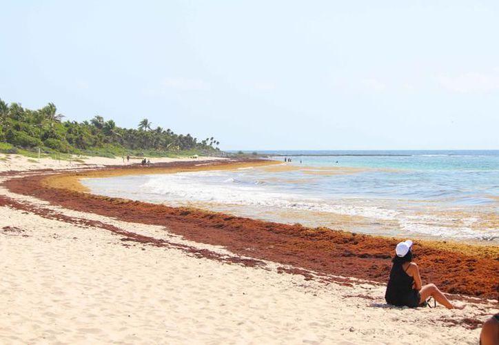 Xcacel es una playa que se considera un punto indicativo del estado de salud de las tortugas marinas. (Redacción)