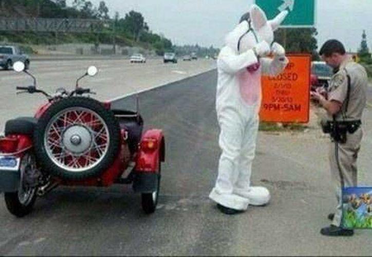 El Conejo de Pascua se salvó de la multa, pero no de una advertencia. (Twitter/CHP Southern Division)