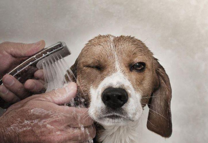 Si no está particularmente sucio, pero ya huele fuerte, puedes hacer este desodorante natural. (Contexto/Internet)