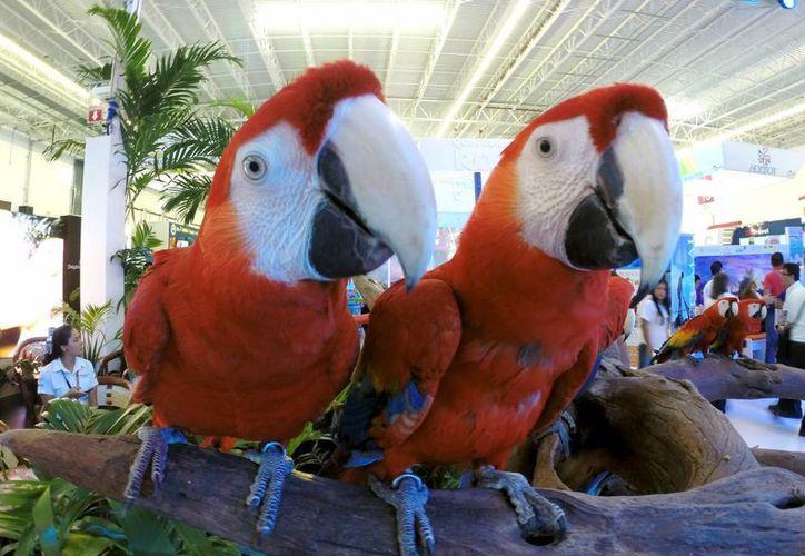 Veintisiete guacamayas rojas criadas en el parque Xcaret, fueron liberadas en una reserva ecológica de Veracruz. (Adrián Monroy/SIPSE)