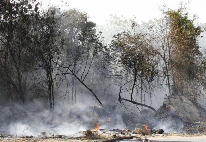 """Las zonas afectadas son un riesgo latente ya que quedaron como """"combustible"""". (Tomás Álvarez/SIPSE)"""