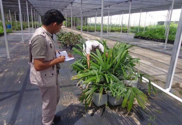 Propietarios no presentaron la documentación para acreditar la procedencia de las plantas. (Redacción)