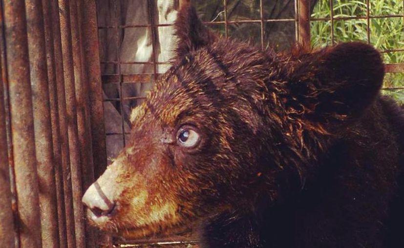 La Profepa aseguró a 133 animales por faltas al trato digno y respetuoso. (Instagram profepa_mx)