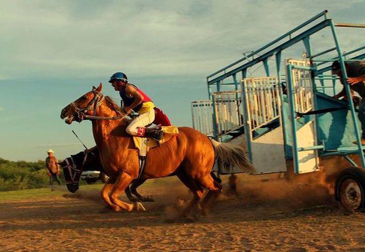El problema de la proliferación de carreras ilegales de caballos se evidenció en octubre pasado con el allanamiento de un hipódromo clandestino. (tvawtv.com)