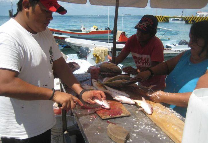 Líder de pescadores pide que se aumente la vigilancia para que respeten tiempo de veda. (Lanrry Parra/SIPSE)