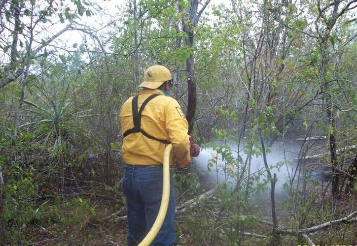 Personal trabaja para mitigar la conflagración. (Lanrry Parra/SIPSE)