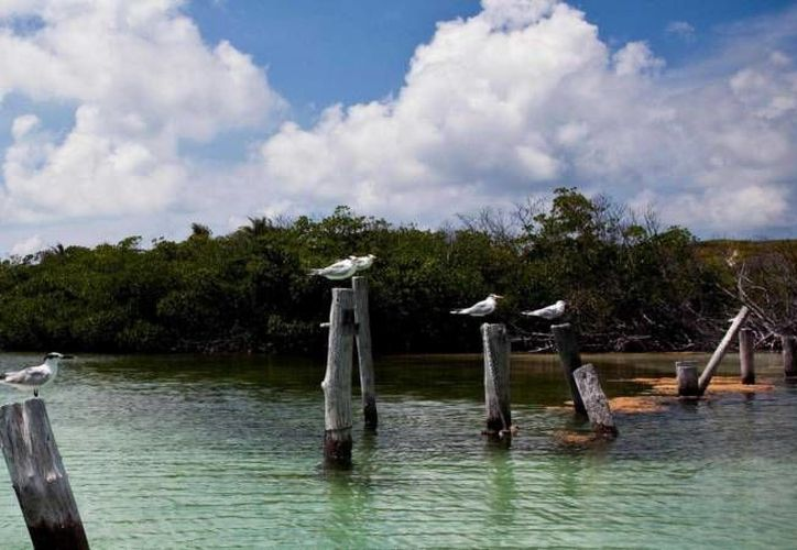 Los humedales son de vital importancia para los acuíferos. (Redacción/SIPSE)