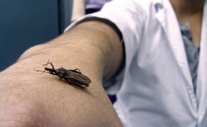 El Mal de Chagas ha presentado un crecimiento considerable en las últimas semanas. (Milenio Novedades)