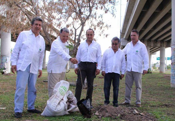 Ignacio Cejudo Valencia, tesorero de Kanan Kab, coloca un arbolito en una de las glorietas del Periférico. (José Acosta/SIPSE)