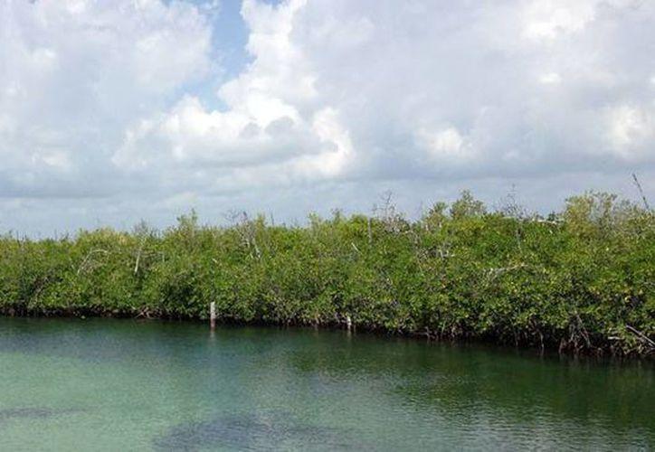 La laguna Nichupté es el hábitat más grande de cientos de cocodrilos en Cancún. (www.visitmexico.com)