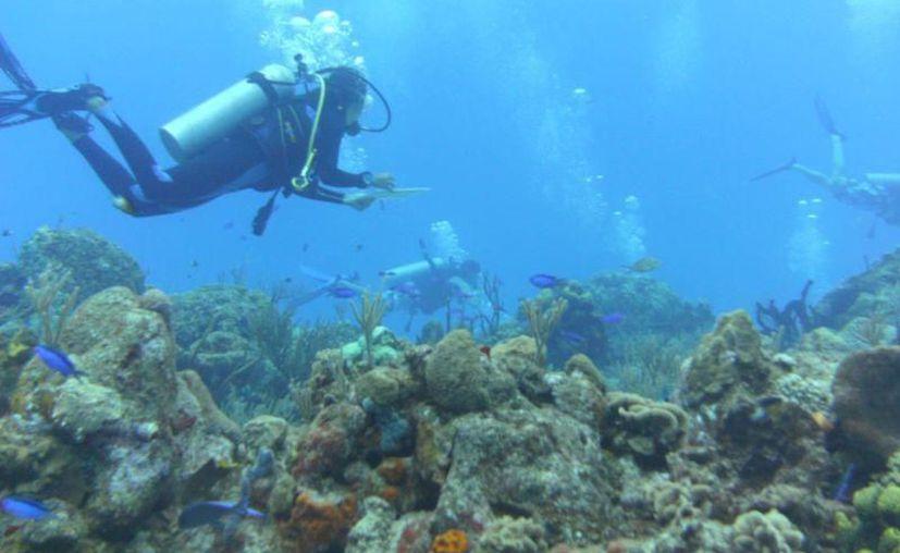 El Programa de Restauración de Arrecifes cuenta con los permisos ambientales. (Archivo/SIPSE)