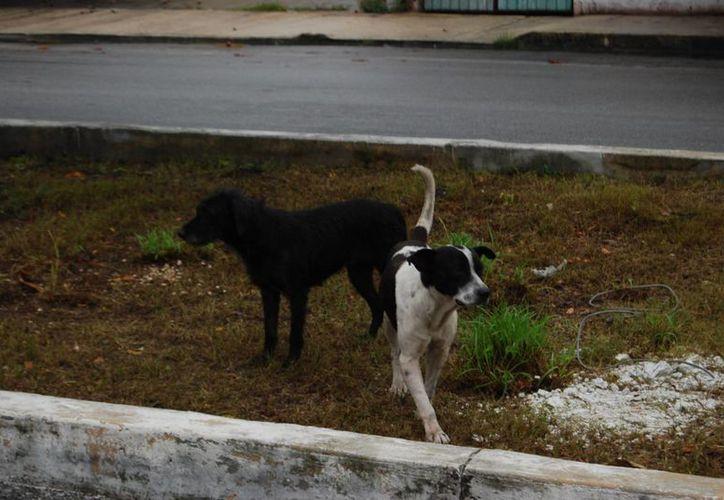 Imparten talleres de concientización animal a los niños para que cuiden sus mascotas. (Tomás Álvarez/SIPSE)