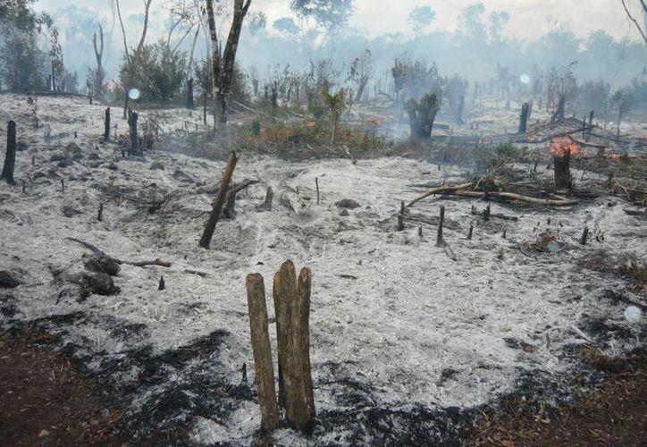 De acuerdo con información de la Conafor, el fuego ha consumido 32 hectáreas.  (Rossy López/SIPSE)