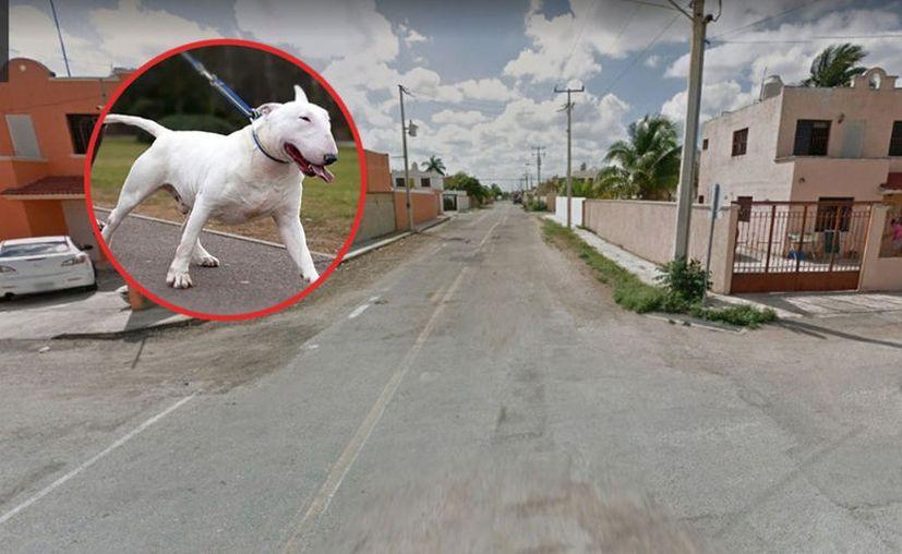 El agresivo animal anda siempre suelto por la calle. (Foto ilustrativa)