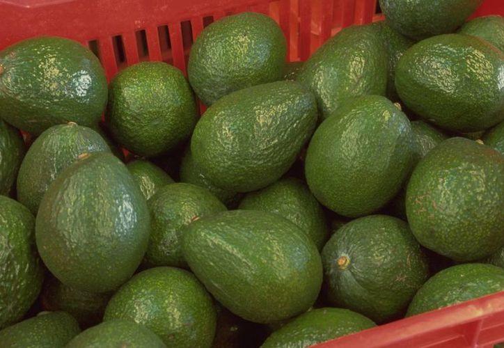 La calabacita, el aguacate (foto), chayote, papa y otros tubérculos, entre los productos que mitigaron el alza de los precios.   (sagarpa.gob.mx)