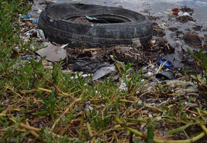 La contaminación de la rivera, zona de humedales y manglares de la Laguna Ciega es evidente. (Foto:Gustavo Villegas/SIPSE)