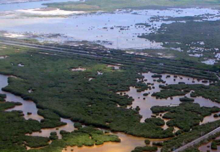 México tiene 11 mil 500 km de litoral, lo que representa un amplio campo de oportunidades para los biólogos marinos. (Milenio Novedades)