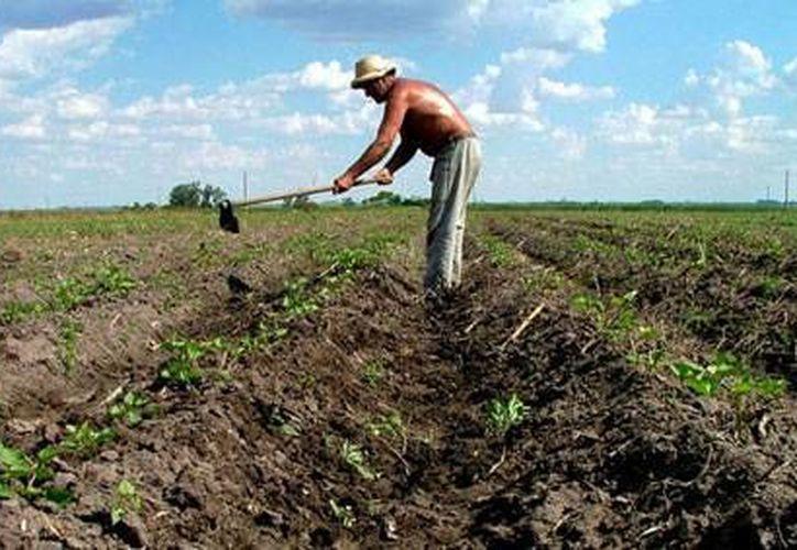 La Sagarpa anunció en Cancún un nuevo plan de préstamos para productores agropecuarios de la Península de Yucatán.  (Foto de contexto/Internet)