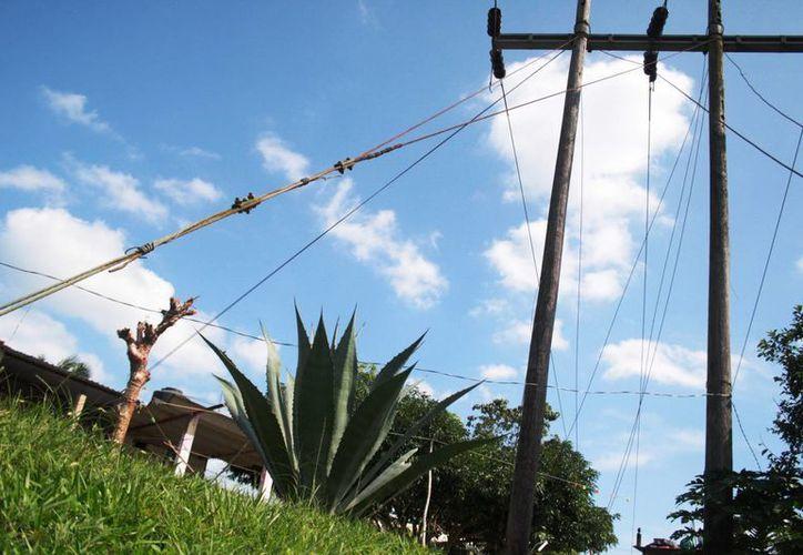 Los postes de la CFE son destruidos por pájaros carpinteros y comején, principalmente. (Octavio Martínez/SIPSE)