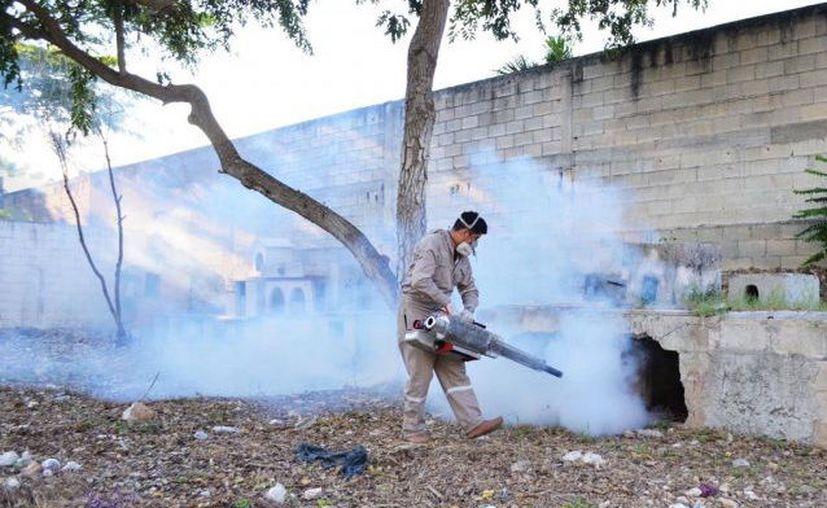 Las autoridades han intensificado las labores al combate del mosquito transmisor. (Novedades Yucatán)