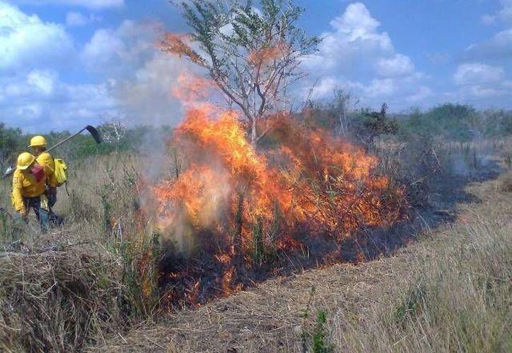 Los incendios contribuyen también a que haya menos vegetación. (SIPSE/Archivo)