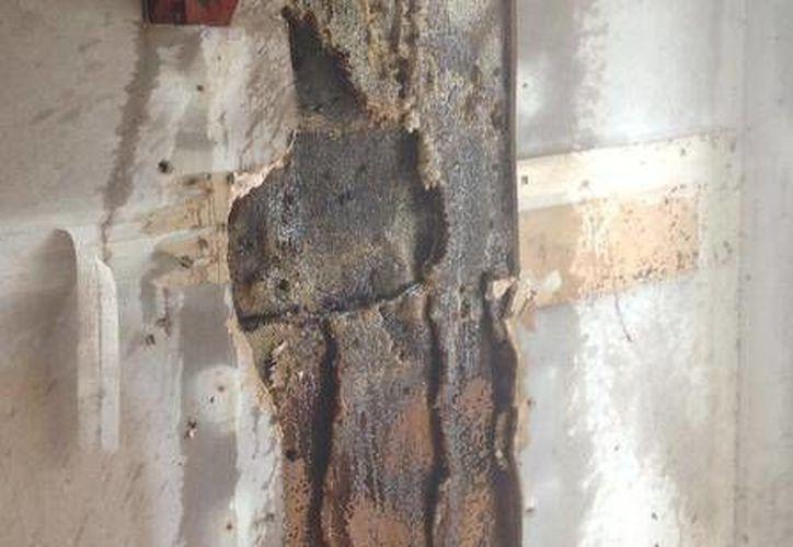 La colmena tenía aproximadamente 3 metros de ancho y 5 metros de altura. (star-telegram.com)
