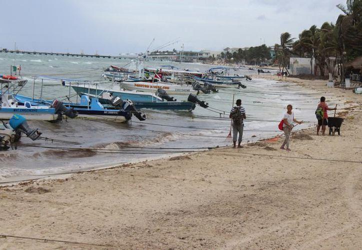 Este sábado recogieron en las playas del primer cuadro de la ciudad alrededor de 100 toneladas del alga. (SIPSE)
