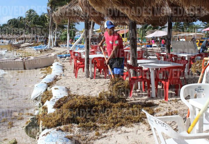 Los restauranteros y habitantes se ven afectados por el arribazón del sargazo. (Alejandra Carrión/SIPSE)