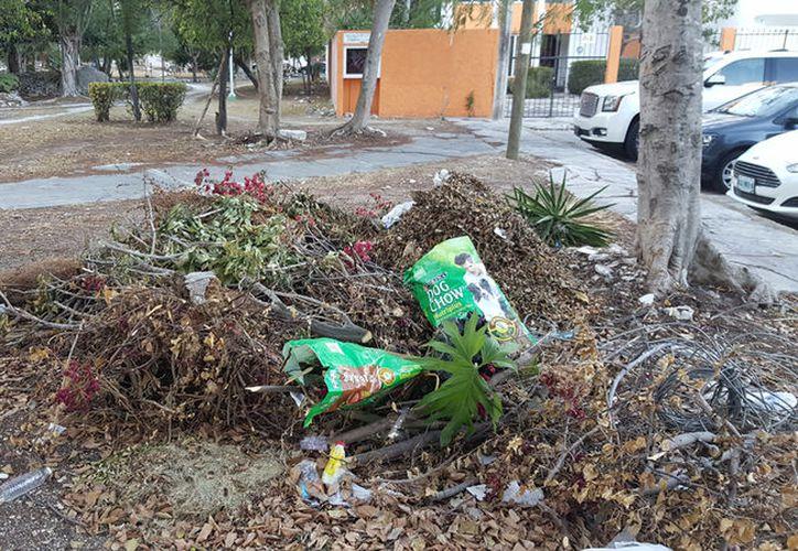 Anuncian reforestación de espacios públicos del municipio. (Sergio Orozco/SIPSE)