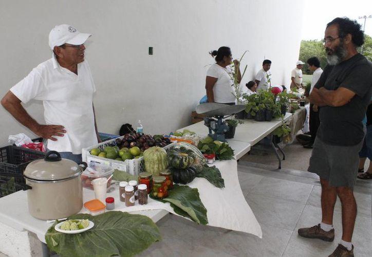 La iniciativa podría ponerse en marcha en febrero si los integrantes del comité aceptan la propuesta. (Francisco Gálvez/SIPSE)