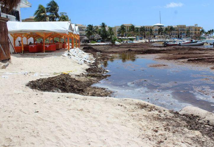 La playa más afectada es la ubicada en la zona de El Recodo. (Adrián Barreto/SIPSE)