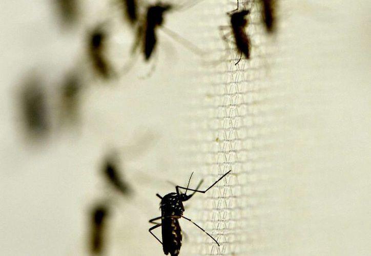 La Secretaría de Salud (SSa) informó que al último corte, en el país hay cinco mil 721 casos confirmados de chikungunya en México. (Archivo/Notimex)