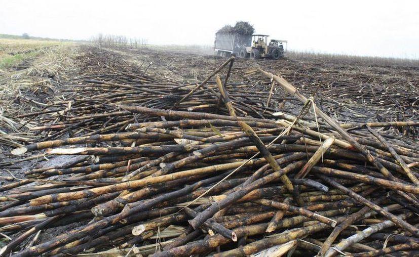 Los ingenios a nivel nacional alcanzaron un millón de toneladas de azúcar producidas. (Edgardo Rodríguez/SIPSE)