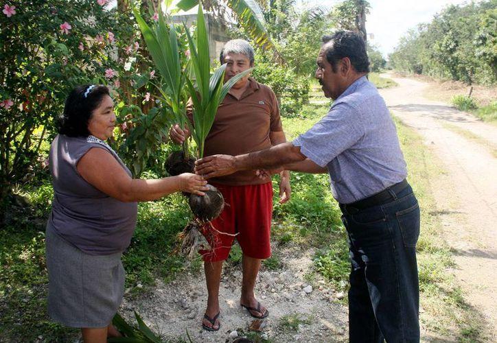 La señora Petronila Chan y el señor José Poot entregaron las plantas. (Cortesía/SIPSE)