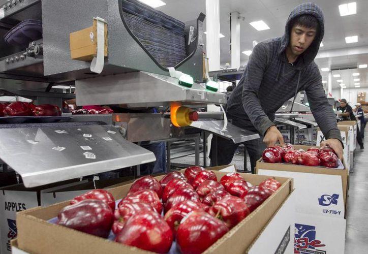El estado de Washington es reconocido como el mayor productor de manzanas de Estados Unidos. (Archivo/AP)