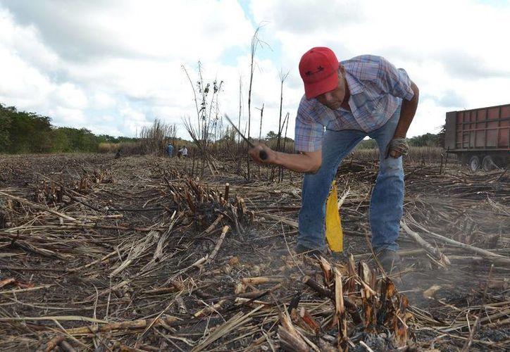 El campo quintanarroense no recibirá   suficientes recursos en este año. (Edgardo Rodríguez/SIPSE)