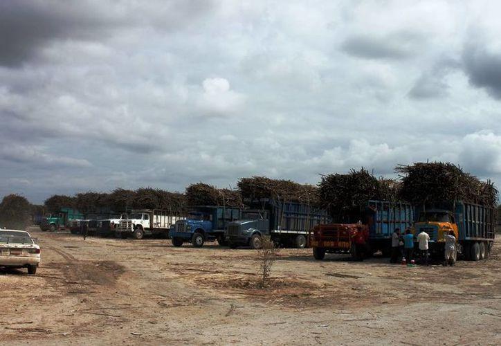 A partir de la próxima semana comenzarán los recorridos de supervisión para evitar que se lleven a cabo los procesos de manera inadecuada y se perjudique la producción azucarera. (Edgardo Rodríguez/SIPSE)
