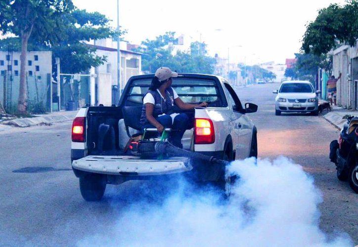 """En julio pasado se reconoció la proliferación del mosquito """"culex"""", responsable de molestias sanitarias. (Daniel Pacheco/SIPSE)"""