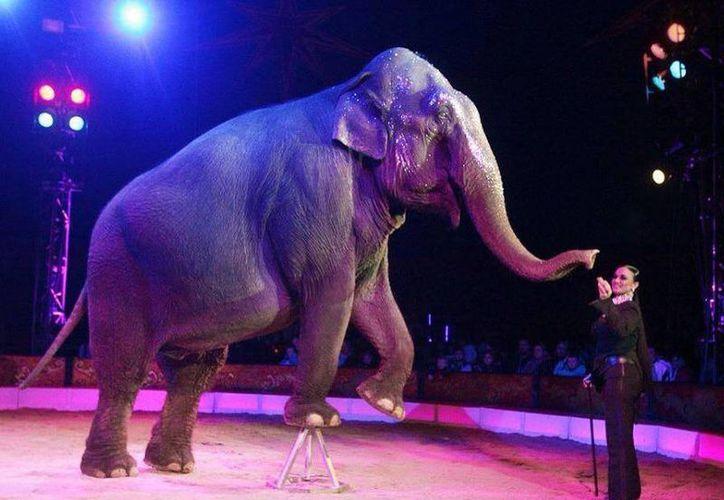 Los dueños de los circos realizaron pagos millonarios por obtener a especies como leones, tigres, jaguares, llamas y camellos, entre otros. (Israel Leal/SIPSE)