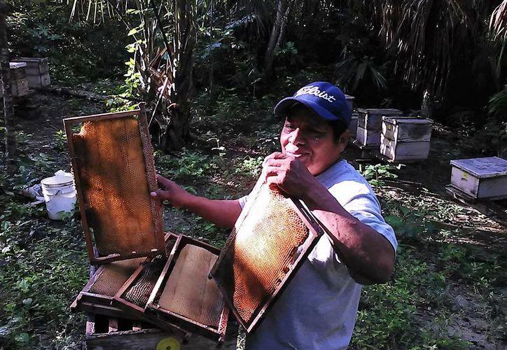 A pesar de que los fabricantes son pequeños, llegan de todas partes del extranjero a probar la miel orgánica y sus derivados. (Javier Ortiz/SIPSE)