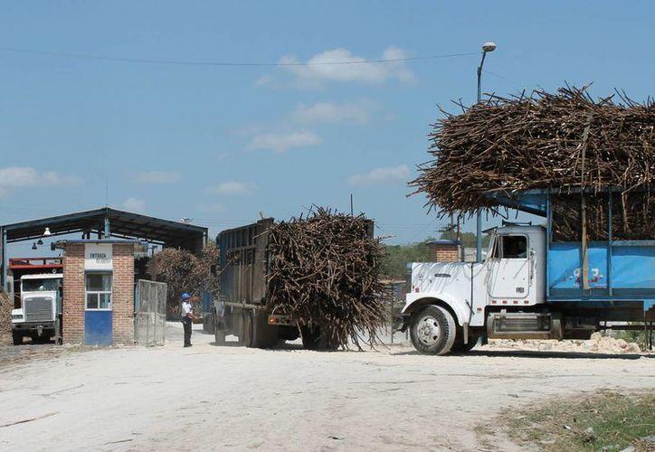 Los productores cañeros esperan recibir en esta y la próxima semana el pago de 20 pesos por tonelada de caña de parte del Ingenio San Rafael por concepto de adelanto, conforme al acuerdo que tomaron. (Harold Alcocer/SIPSE)