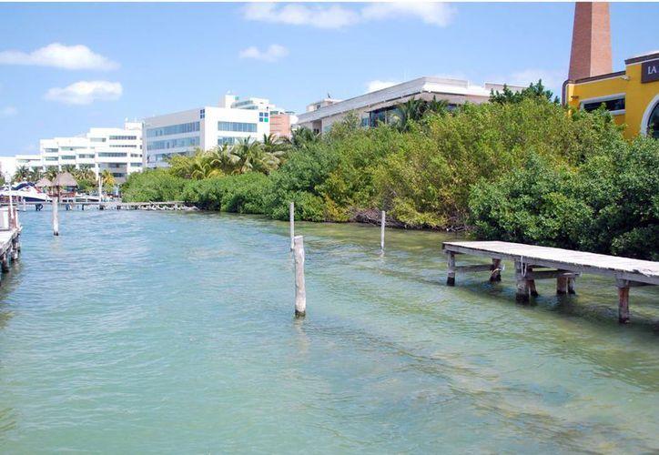 La siembra de manglar se realizó en colaboración con Aeropuertos del Sureste. (Tomás Álvarez/SIPSE)
