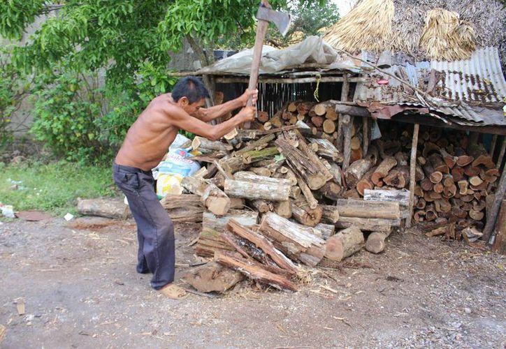 Todos los días, desde temprano, Silverio Dzib Chablé corta la leña que recolecta de ramas caídas, para ofrecerla en la ciudad. (Benjamín Pat/SIPSE)
